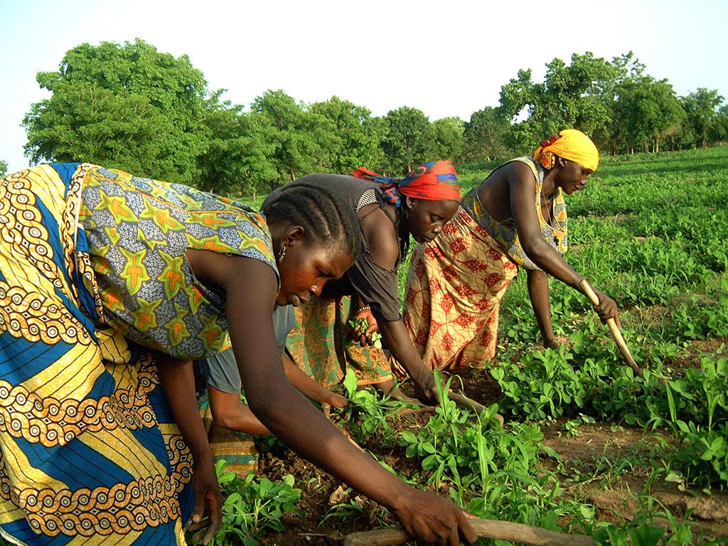 tatemoe mujeres centro agricola kyabe avanza