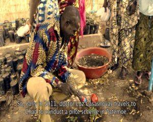 Artemisia Annua como tratamiento contra la malaria